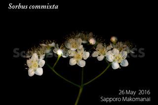 160529_web_S_commixta_FL_160526_01_02_300_600.jpg