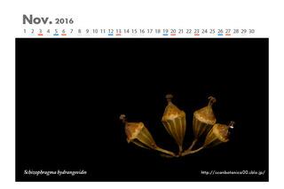 161105_web_C_2016_11_S_hydrangeoides_FR_131117-01_10+10_600.jpg