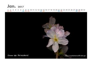 170101_web_C_2017_01_Cerasus_160117_10+10_600.jpg