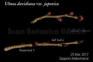 170329_web_U_d_.japonica_fb_lb_170325_40_01_300_600.jpg