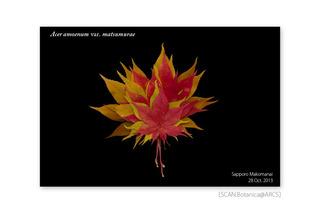 web_181023_A_a_matsumurae_rl_131028_01_300_PC_900.jpg