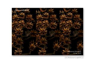 web_190224_S_salicifolia_FR_190210_16_40_1200_PC_900.jpg